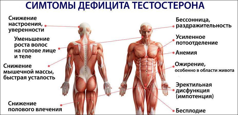 Медики выяснили, какие продукты снижают выработку тестостерона у мужчин – новости барановичей, бреста, беларуси, мира. intex-press