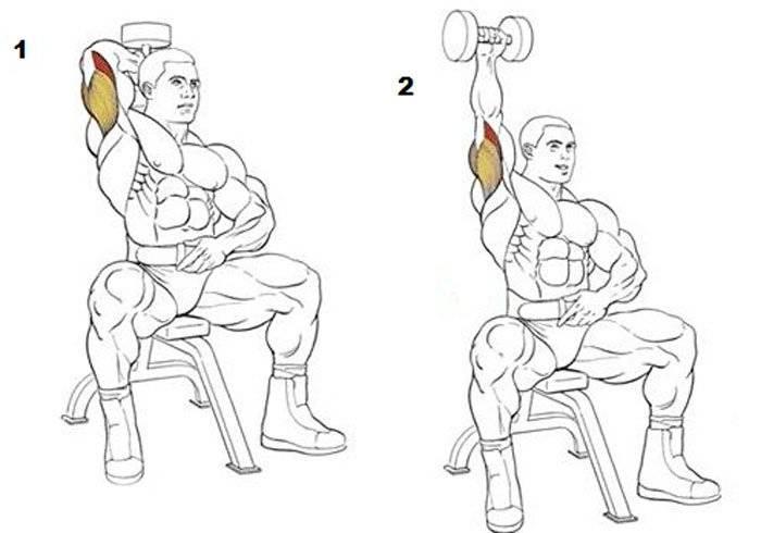 Топ-10 упражнений для трицепсов