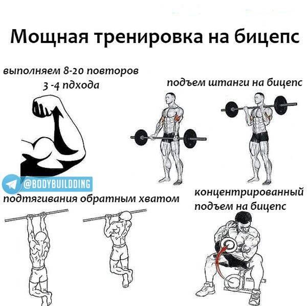 Как накачать бицепс: увеличить объем рук за короткие сроки - trainingbody