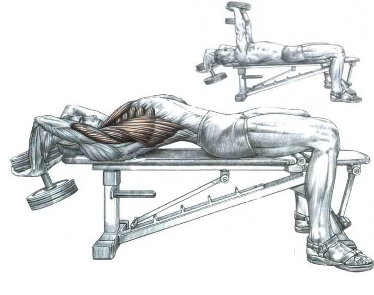 Техника выполнения упражнения пуловер: какие мышцы работают?