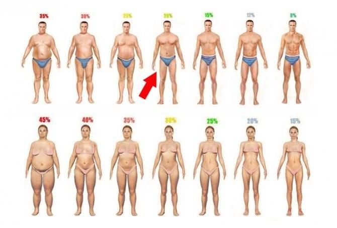 Диетический калькулятор: процент жира в организме, индекс массы тела (имт)