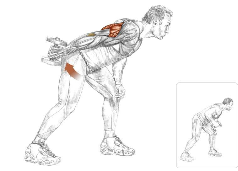 Тренируем трицепс в домашних условиях | rulebody.ru — правила тела