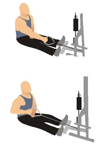Тяга вертикального (верхнего) блока: техника, работающие мышцы, виды
