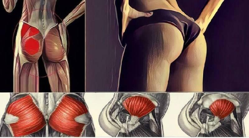 Как накачать попу так, чтобы не качались ноги. мы лепим тело: как накачать ягодицы.   здоровье человека