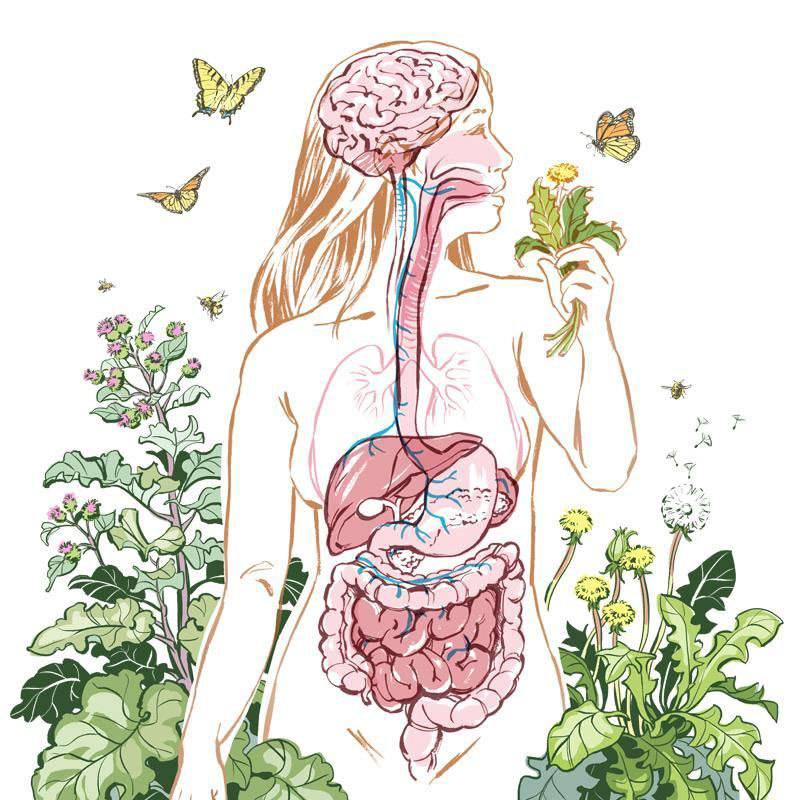 Выведение токсинов и шлаков. бифилакт биота