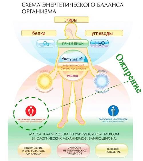 Гормон инсулин: что это и как влияет на похудение