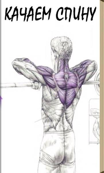 Упражнения для спины: комплекс с штангой и гантелями и собственным весом