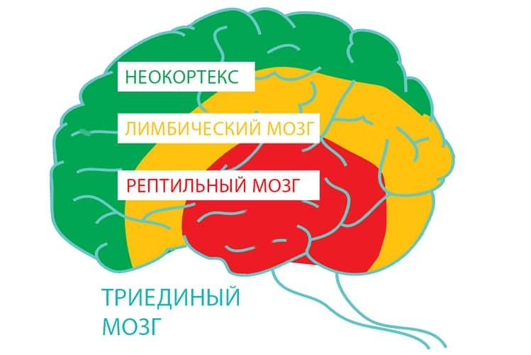 Биохимия тела — продукт сознания или вечная молодость... возможна!!!