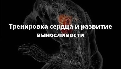 Выносливость сердца и разрешенные для этого препараты - skiteamrussiaskiteamrussia