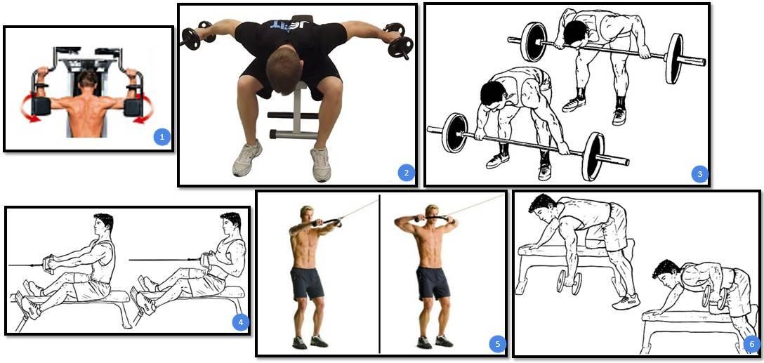 Комплексные упражнения на спину со штангой: правильная техника выполнения
