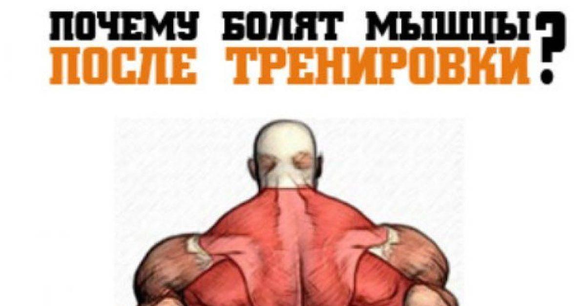 Почему болят мышцы после тренировки? » спортивный мурманск