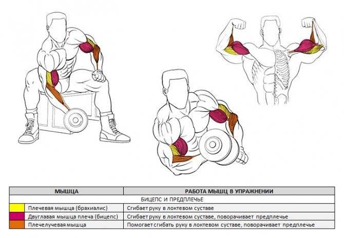 Упражнения для рук: комплексы с гантелями и без, лучшие программы тренировок на силу и укрепление мышц внутренней и внешней стороны плеча и предплечья