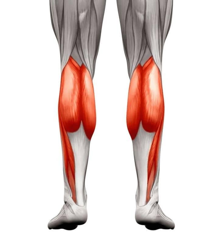 Трёхглавая мышца голени