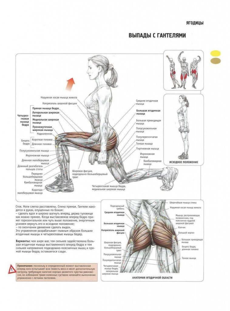 Базовые упражнения на ноги и ягодицы - всё о спортивных тренировках