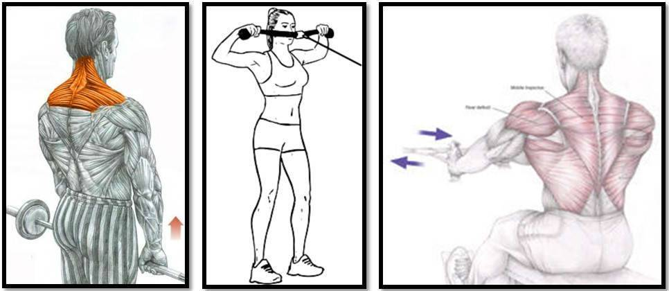 Упражнения на трапецию