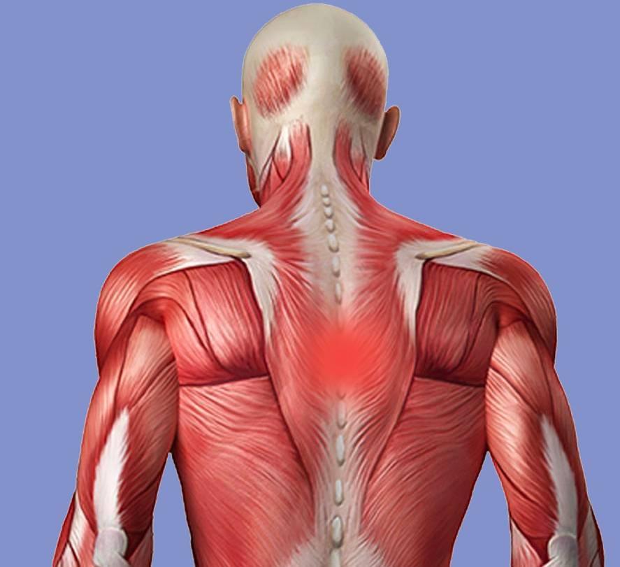 Боль в спине в области лопаток: причины и способы лечения