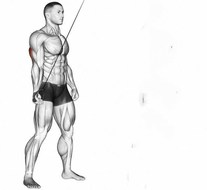 Разгибание рук на блоке стоя – sportfito — сайт о спорте и здоровом образе жизни
