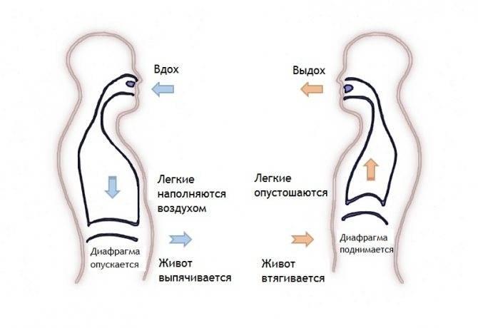 Дыхание животом: диафрагмальное дыхание — панические атаки