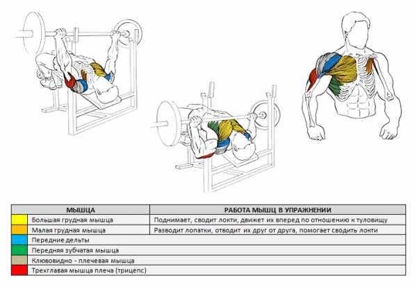 Тренировочная программа на грудные мышцы. • bodybuilding & fitness