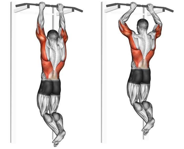 Какие мышцы работают при подтягивании широким, узким, обратным и параллельным хватом на турнике