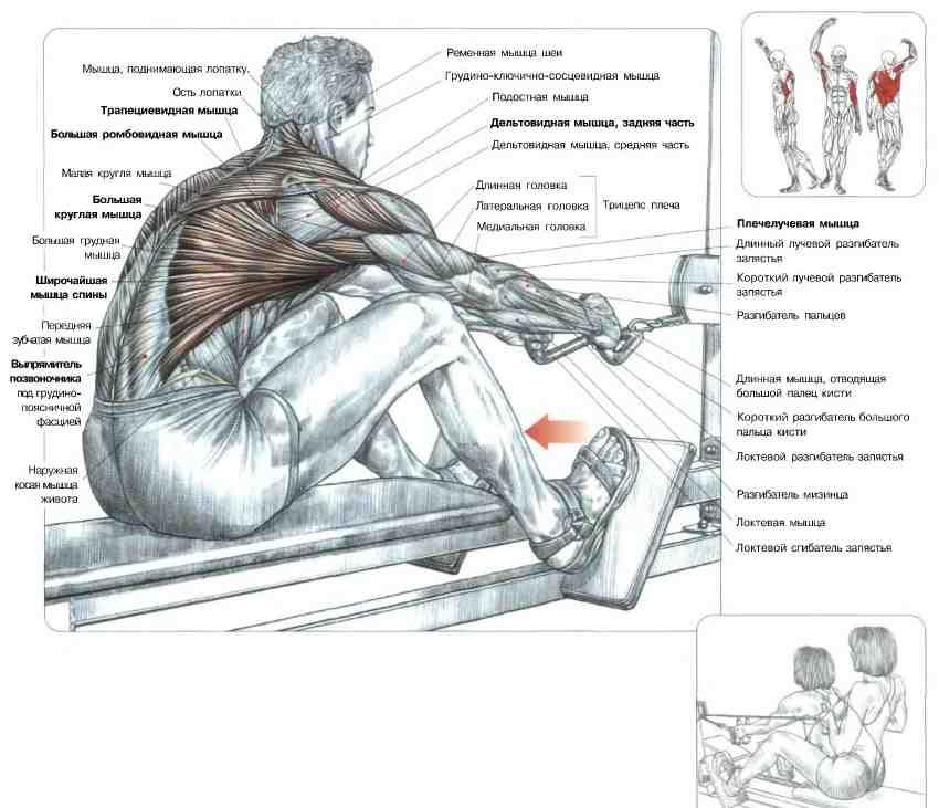 Тренировка спины в тренажерном зале: фото + видео базовых упражнений. узнайте как накачать широкую спину!