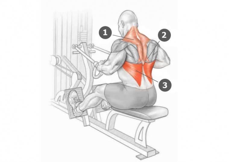 Упражнения для спины в зале: 8 эффективных упражнений