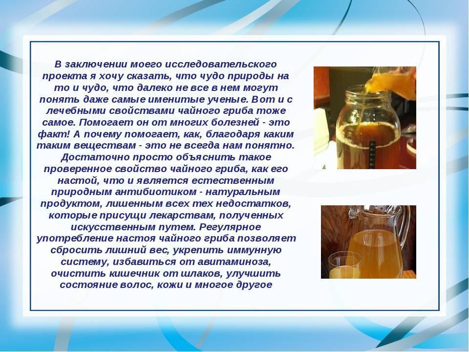 Чайный гриб: польза и вред для организма, отзывы врачей