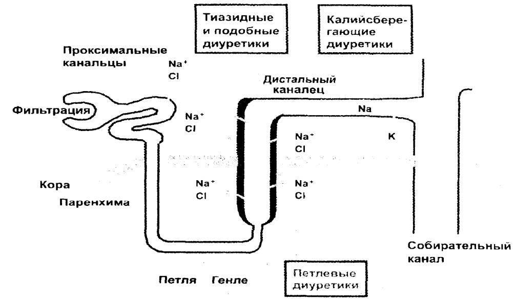 Мочегонные при гипертонии