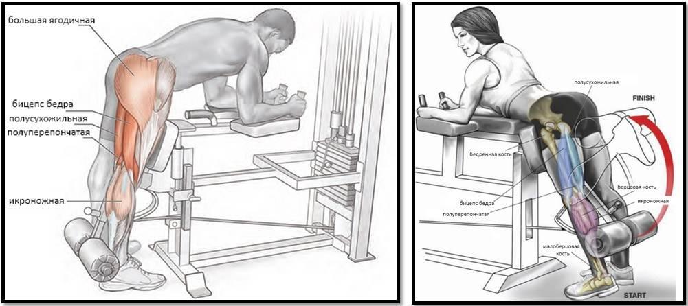 Упражнения на бицепс бедра: мёртвая тяга, сгибание голени, гиперэкстензия