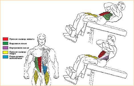 Римский стул – особенности и виды тренажера, техника упражнений