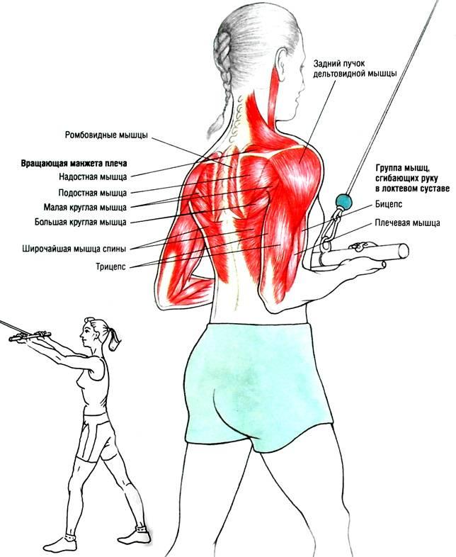 Упражнения для растяжки позвоночника в домашних условиях