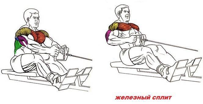 Тяга нижнего блока к поясу: видео и фото упражнения