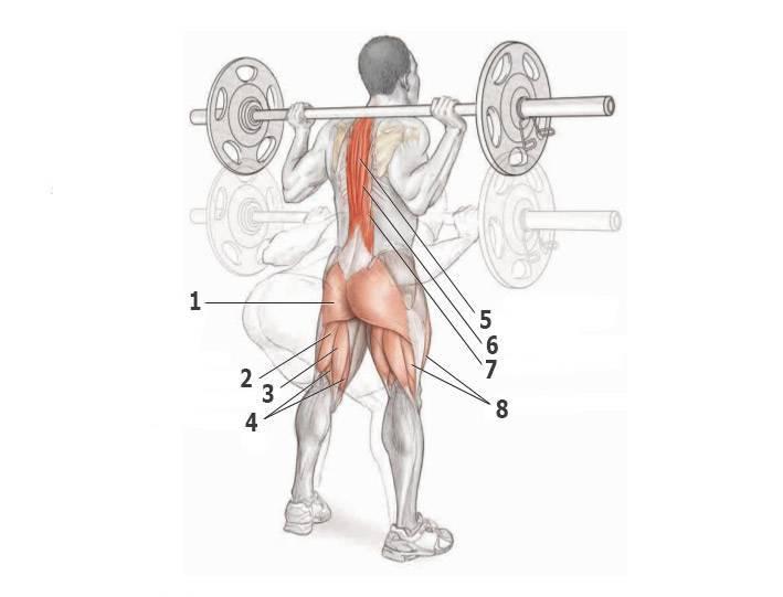Приседания со штангой за спиной: техника, работающие мышцы