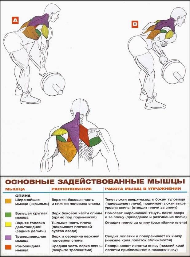 Упражнения на трапецию с гантелями: советы тренера