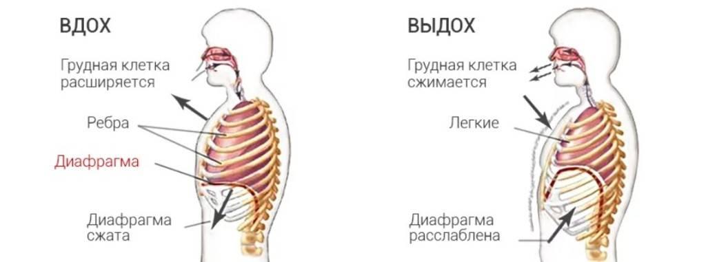 Тренировка дыхательной системы: дыхание — это жизнь!