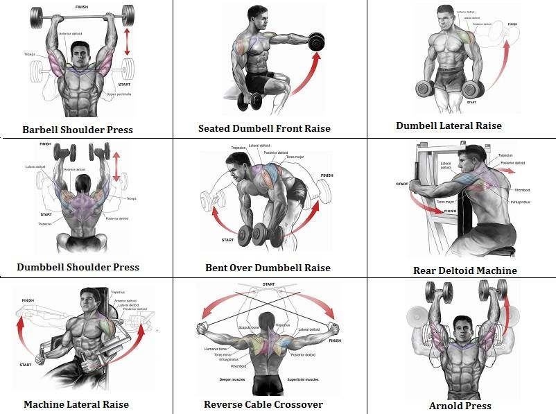 Тренировка грудных мышц и спины в один день