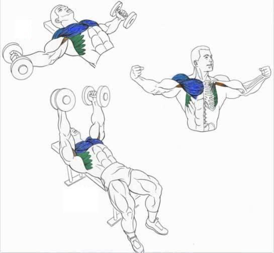 Упражнения для рук без гантелей | yourfitnesslife.ru