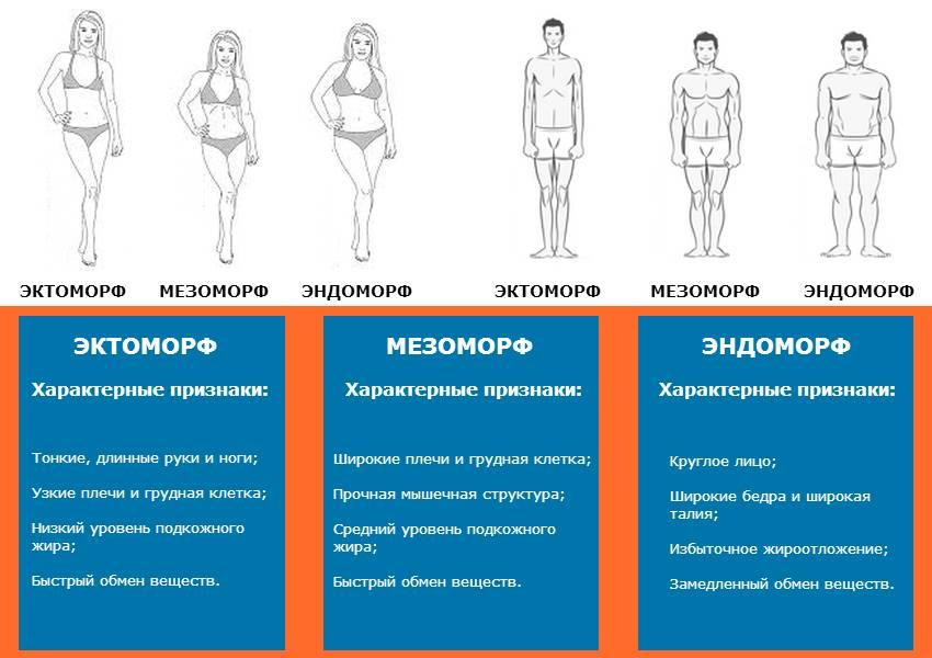 Программа тренировок для эктоморфа: комплекс упражнений, питание для эктоморфа