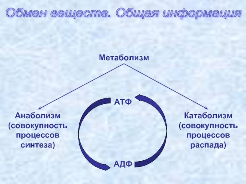Катаболизм мышц: этапы и процессы, как избежать распада мышц в бодибилдинге