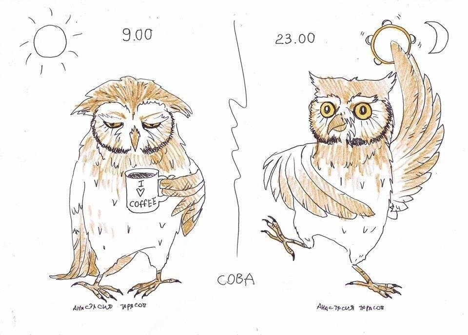 Сова, жаворонок, голубь: характеристики хронотипов человека