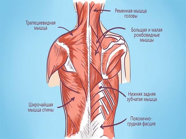 Боль под лопатками сзади со спины – причины, симптомы и лечение