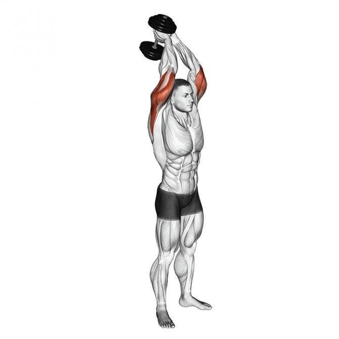 Упражнения на трицепс с гантелями: виды, лучший базовый комплекс для мужчин и женщин