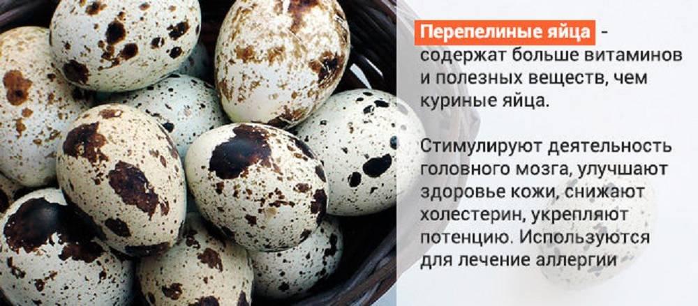 Яйца и холестерин новые исследования китайских ученых