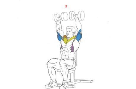 Жим гантелей сидя - самые эффективные упражнения