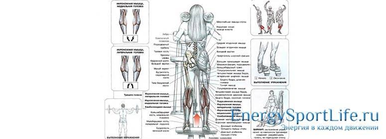 Анатомия мышц голени человека - информация: