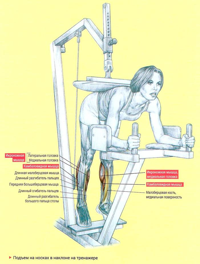 Упражнение ослик
