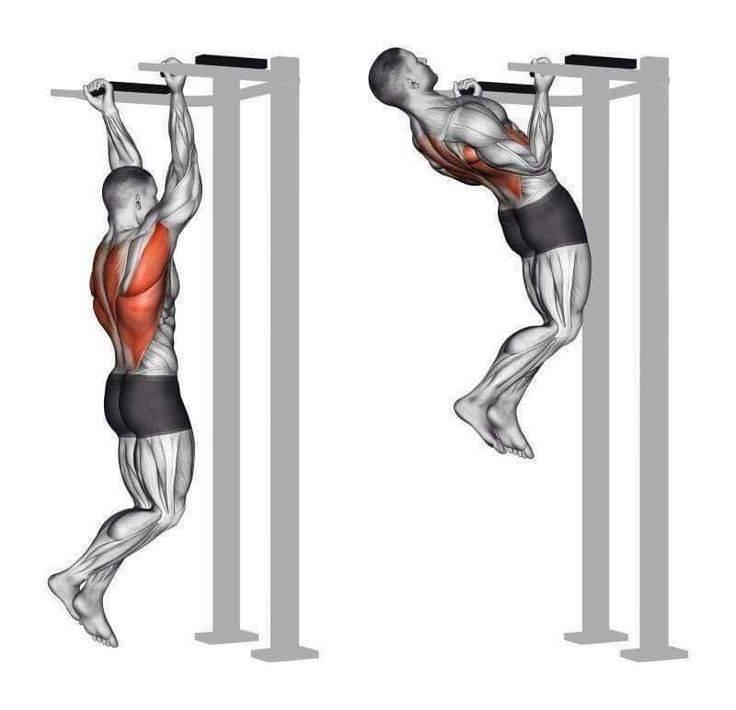Какие мышцы работают при подтягивании в различных техниках на турнике или перекладине