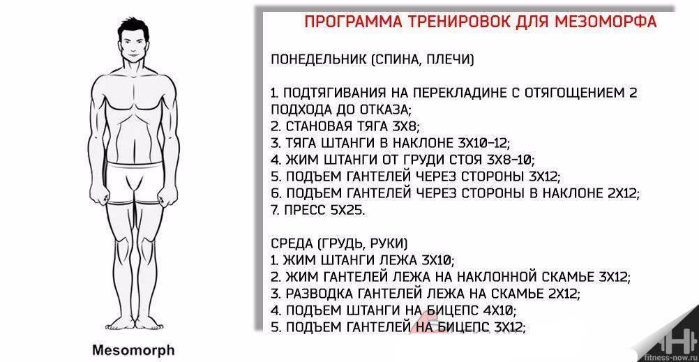 Особенности питания мезоморфа   proka4aem.ru