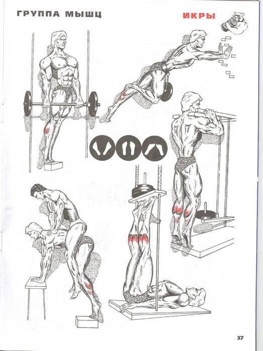 Комплексная тренировка для ног: лучшие упражнения для набора массы (с видео) | rulebody.ru — правила тела