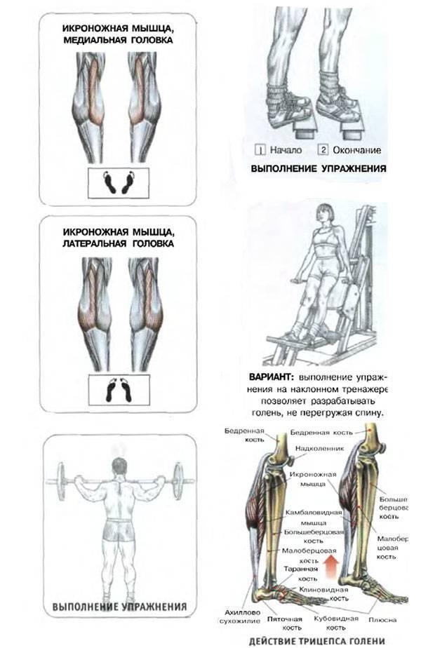Боль в икроножных мышцах: лечение в москве